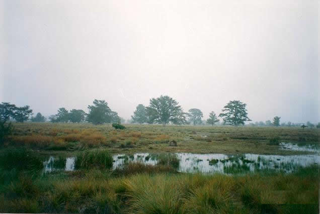 terreno en venta rio verde san luis potosi