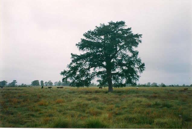 Terreno en Venta Río Verde, San luis potosi